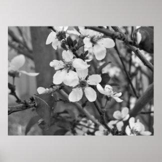 敏感な花3623 ポスター