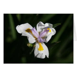 敏感な花 カード