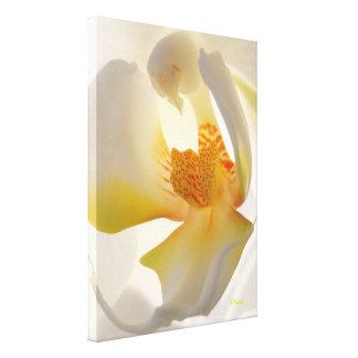 敏感な蘭のキャンバスプリントの芸術品 キャンバスプリント