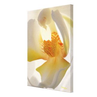 敏感な蘭の花のキャンバスプリントの芸術品 キャンバスプリント