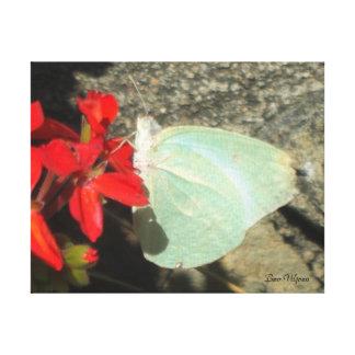敏感な蝶 キャンバスプリント
