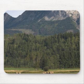 救い出された干し草、アルバータ、カナダが付いている分野 マウスパッド