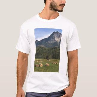救い出された干し草、アルバータ、カナダが付いている分野 Tシャツ