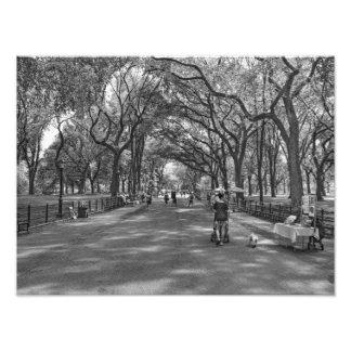 文学的な歩行セントラル・パーク、ニューヨーク フォトプリント