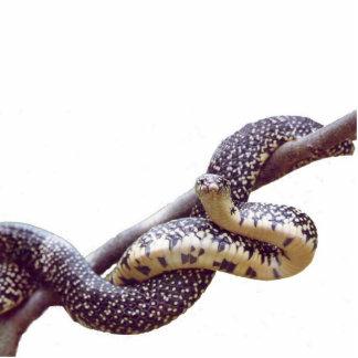 斑入りのキングヘビ属フォトスカルプチャー 写真彫刻マグネット