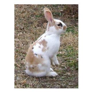 斑入りのバニーウサギ ポストカード