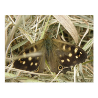 斑入りの木製の蝶郵便はがき ポストカード