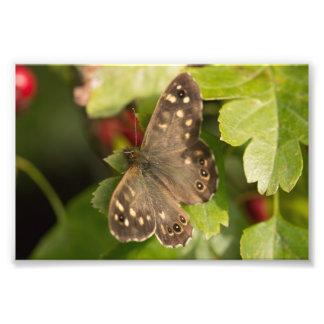 斑入りの木製の蝶 フォトプリント
