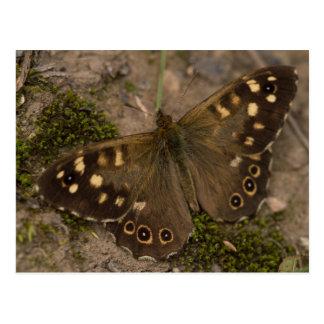 斑入りの木製の蝶 ポストカード