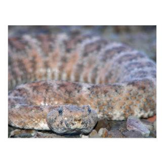 斑入りガラガラヘビ ポストカード