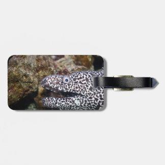 斑点を付けられたウナギの右側のアクアリウム動物 ラゲッジタグ