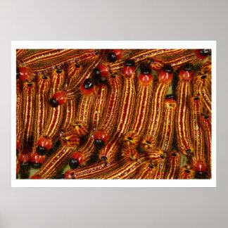 斑点を付けられたDatanaのガの幼虫 ポスター
