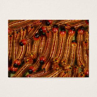 斑点を付けられたDatanaのガの幼虫 名刺