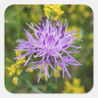 斑点を付けられたKnapweedの紫色の野生の花の正方形のステッカー スクエアシール