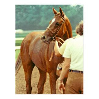 断言された純血種の競馬馬1978年 ポストカード