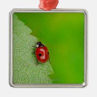 新しいのに上っている小さいてんとう虫の上の日が差すこと メタルオーナメント