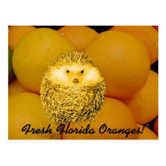 新しいオレンジハリネズミ ポストカード