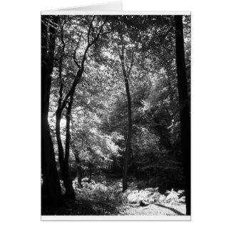 新しい森林9月 カード