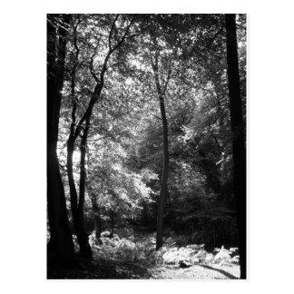新しい森林9月 ポストカード
