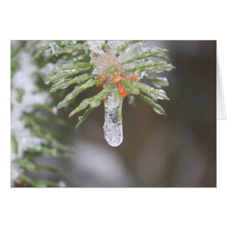 新年および至: Pinecicle カード