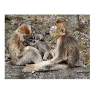 新生児を持つ2匹のメスの金猿 ポストカード