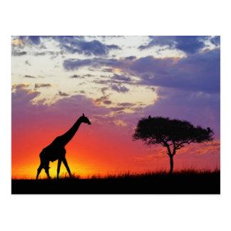日の出でシルエットを描かれるキリンGiraffa ポストカード