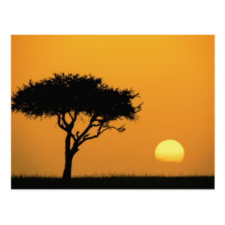 日の出でシルエットを描かれる独身のなアカシアの木マサイ語 ポストカード