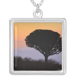 日の出でシルエットを描かれるCandelabraの木 シルバープレートネックレス