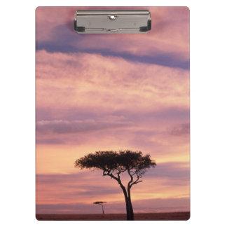 日の出のアカシアの木のシルエットのイメージ クリップボード