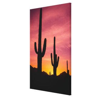 日の出のサグアロのサボテン、アリゾナ キャンバスプリント