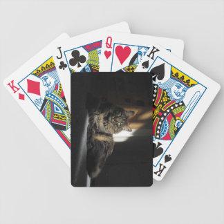 日光のトランプのKimber猫のスライバ バイスクルトランプ