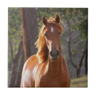 日光のブラウンの馬 タイル