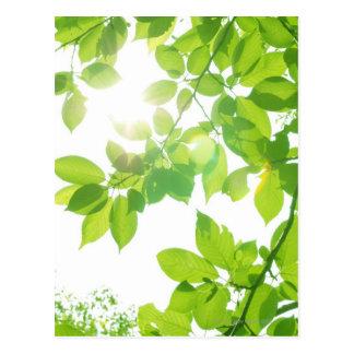 日光の緑の葉、クローズアップ ポストカード