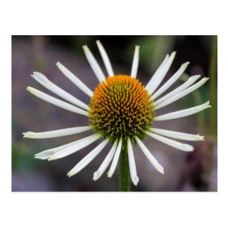日光の花の郵便はがき ポストカード