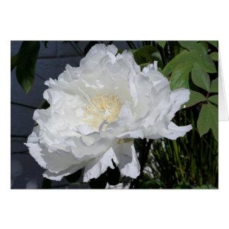 日光の花柄Pに開いた白いシャクヤクほとんど十分に カード
