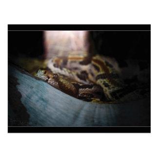 日光の蛇 ポストカード