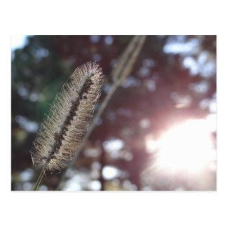 日光3の野草 葉書き