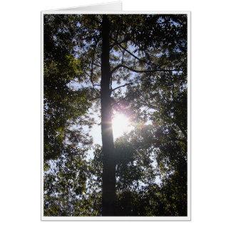 日光 グリーティングカード