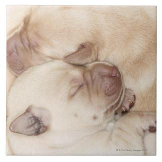日古い黄色いラブラドル・レトリーバー犬の子犬、10 タイル