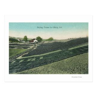 日曜日に乾燥するプルーンの空中写真 ポストカード