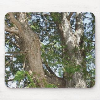 日曜日のヒマラヤスギの木の幹 マウスパッド