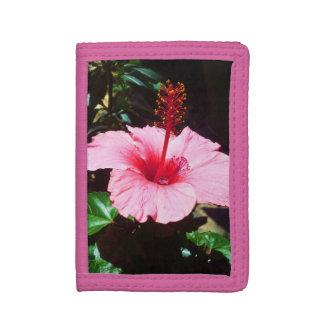 日曜日のピンクのハイビスカス
