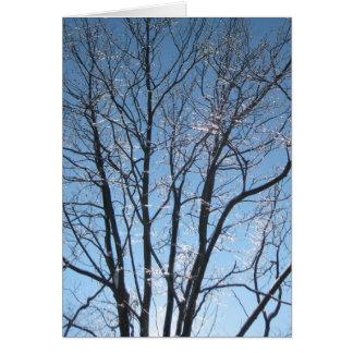 日曜日の冬の枝範囲 カード