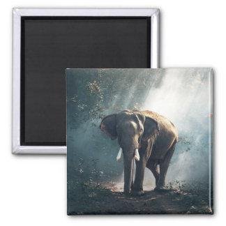 日曜日は森林磁石の象をなでました マグネット