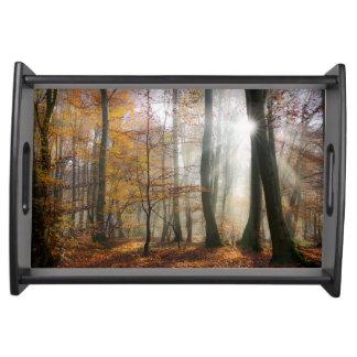 日曜日は神秘的で霧深い森林、自然の写真を放射します トレー