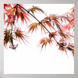 日本のなアメリカハナノキの芸術の写真撮影 ポスター