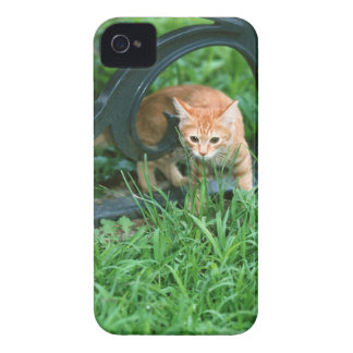 日本のな猫3 Case-Mate iPhone 4 ケース