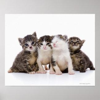 日本のな猫 ポスター
