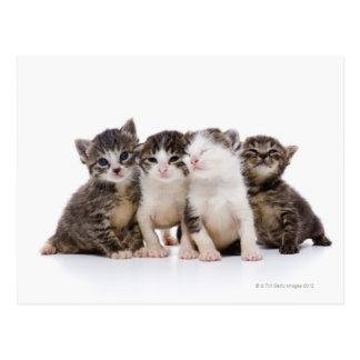日本のな猫 ポストカード