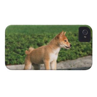 日本のな超小型のShiba 2 Case-Mate iPhone 4 ケース
